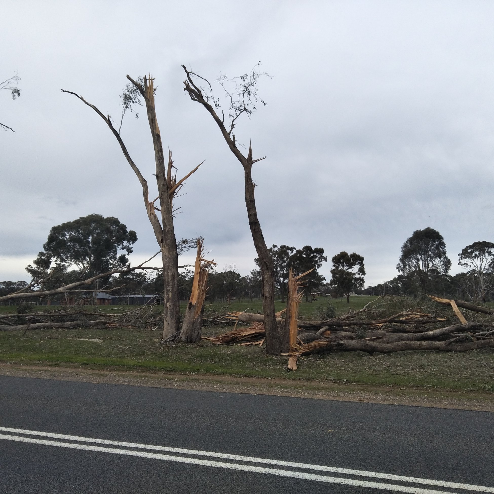 photo: Bureau of Meteorology;link: https://gallery.windy.com/albums/a/tornadoes-axe-creek-australia-2019.jpg;desc: Trees shredded from tornado in Axe Creek near Bendigo, Vic, 29 June 2019;